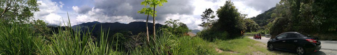 Tree Cloud - Sky Nature Growth Outdoors Beauty In Nature Sky Grass Landscape Cameronhighlands Malaysia Panorama Shot. Panoramic Views Panoramicview