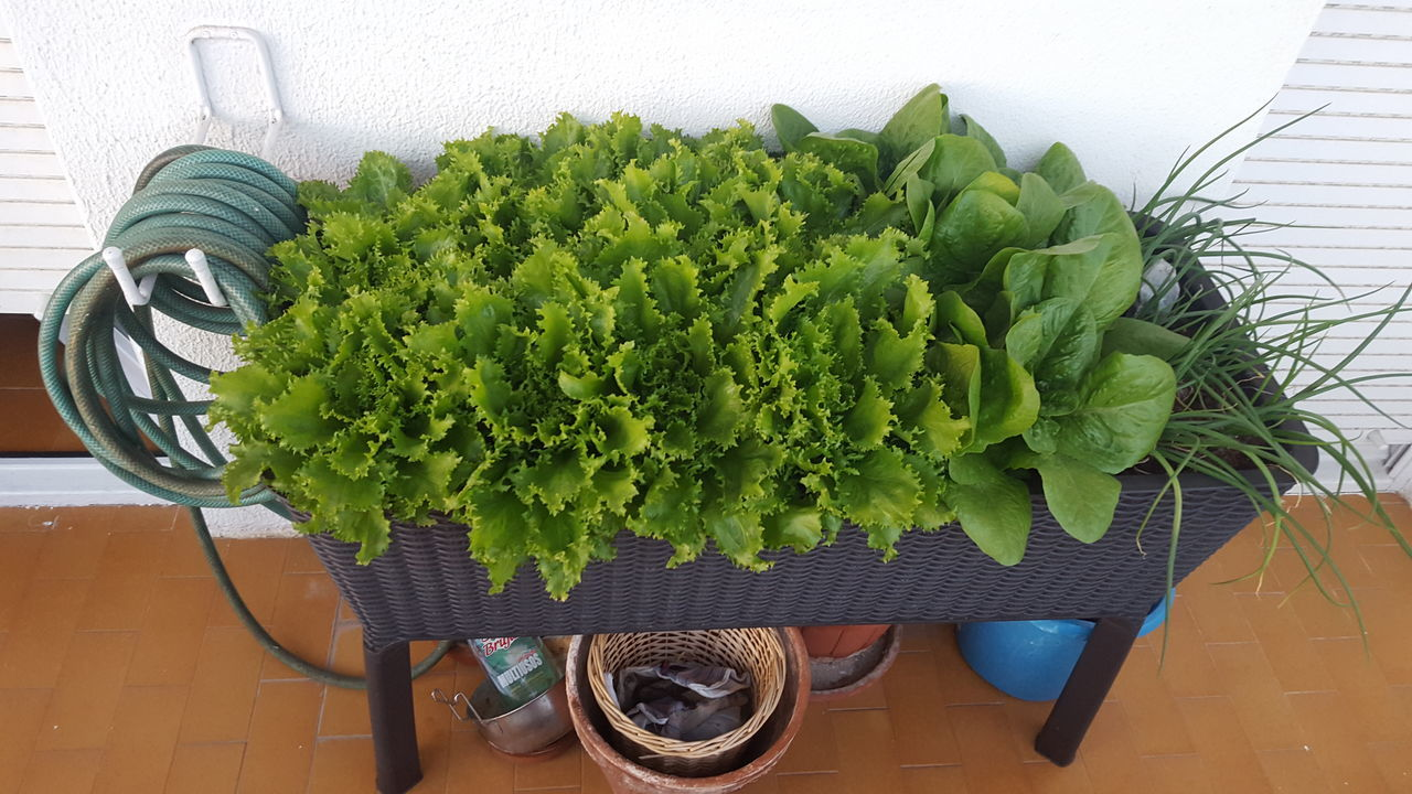 Close-up Day Food Food And Drink Freshness Green Color Growth Healthy Eating High Angle View Indoors  No People Plant Raw Food Table Vegetable Vegetarian Food