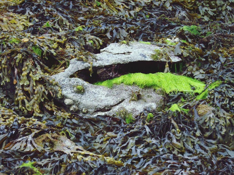 Say what? Fanore, Ireland Fresh On Eyeem  EyeEm Gallery Ayeshea Bah Outdoor Photography Beach Photography Landscape_photography Water Colours Atmospheric Nature Faces Hidden Faces Kelp EyeEm Nature Lover Ireland🍀 Nature Photography