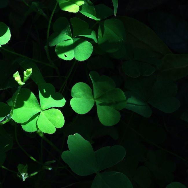 TreePorn Nature_collection EyeEm Nature Lover EyeEm Gallery