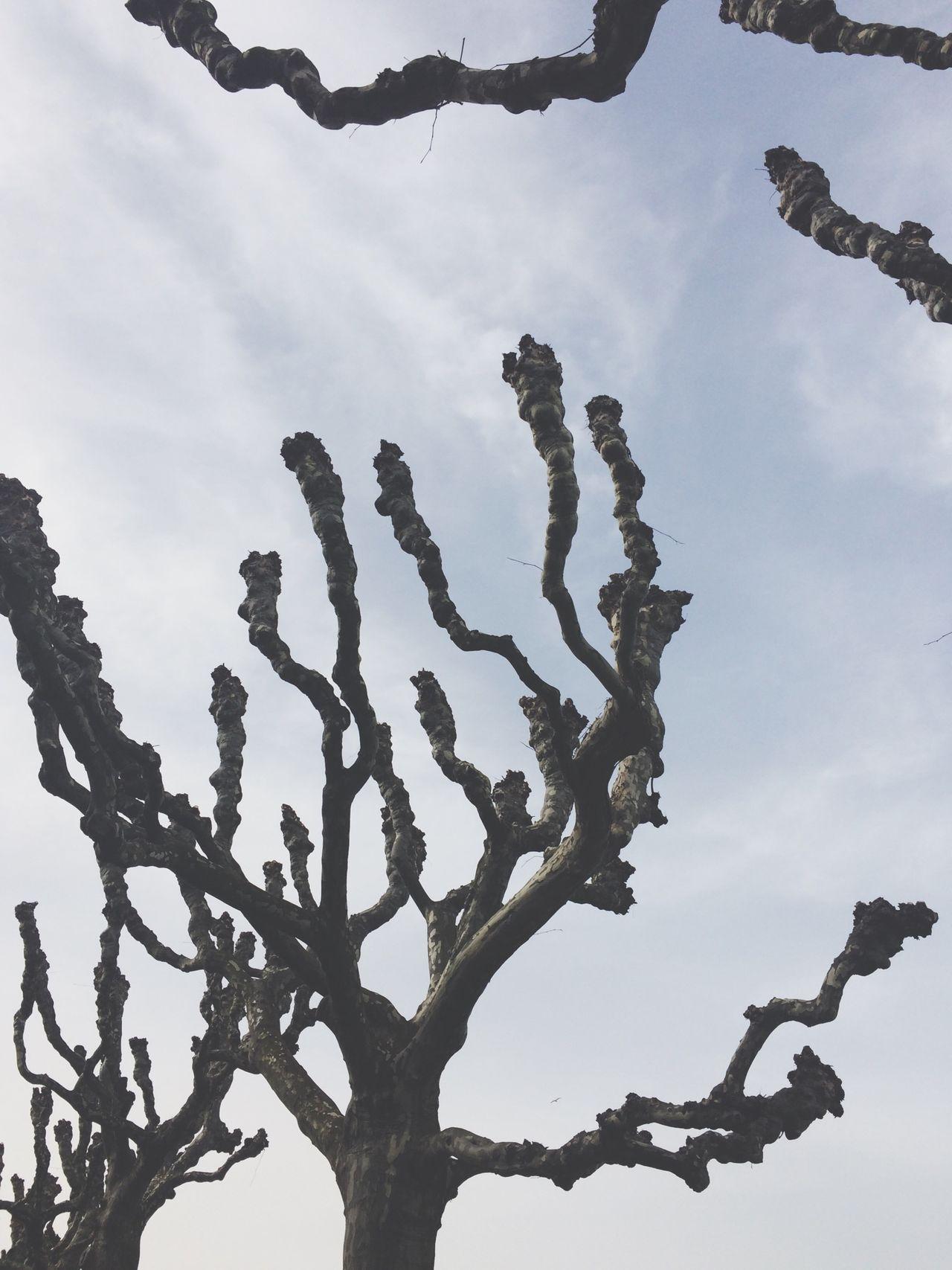 Beautiful stock photos of totenkopf, Bare Tree, Branch, Cloud - Sky, Day
