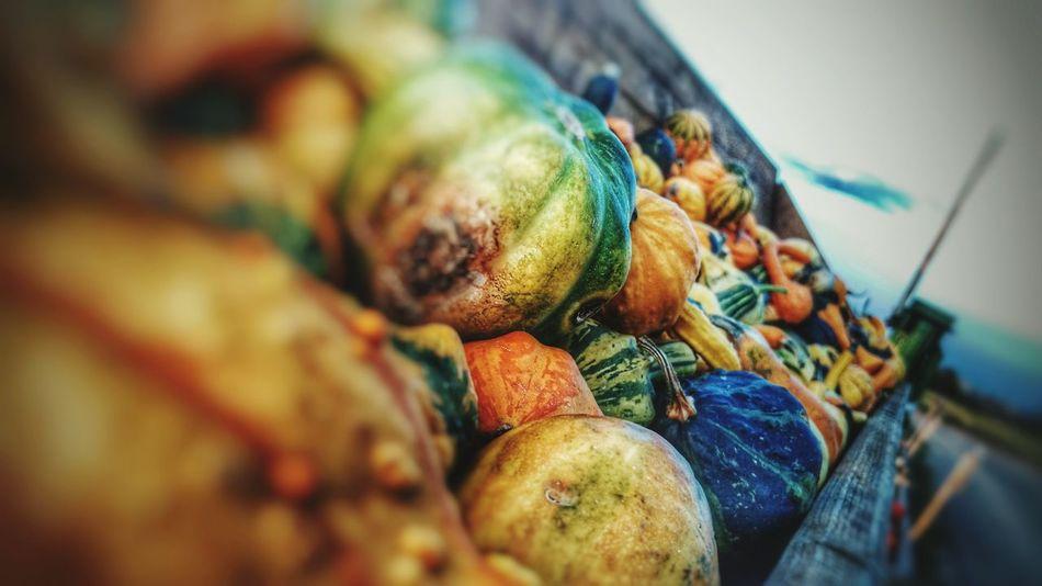 Pumpkins Pumkinpicking🎃 Herbstfarben Herbst Autumn Colors Auutum Colorful