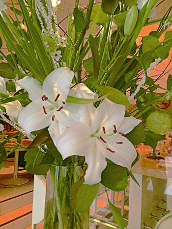 Flower Collection EyeEm Best Shots - Nature EyeEm Nature Lover Loving Flowers Flowers