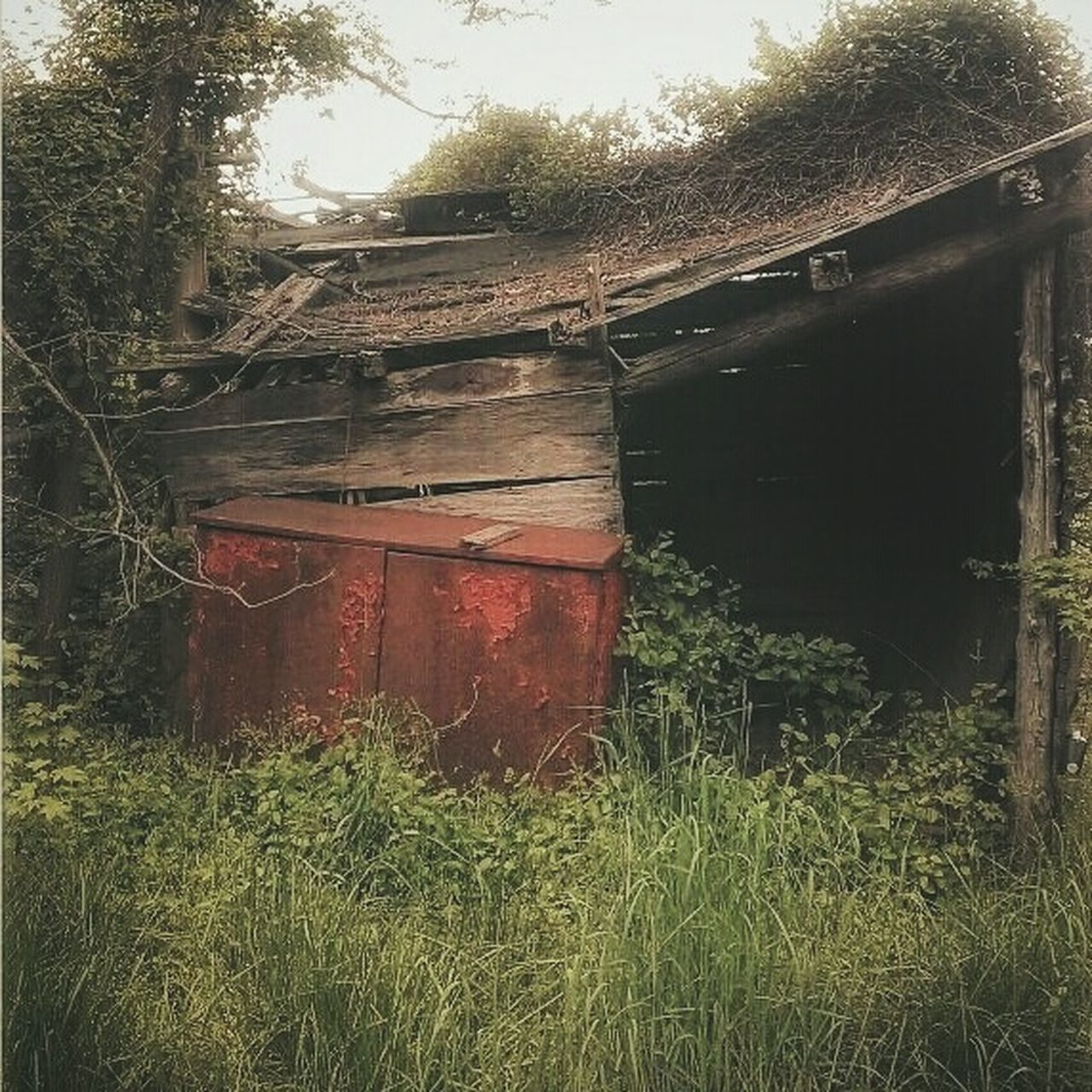 Pandora's Box... AMPt - Abandon Building Exterior Weathered Abandoned Close-up Deterioration Abandoned Buildings Abandoned & Derelict Nature_collection Rural America Rural Scene Creepy Houses Nature Taking Over Rural Exploration Ivy Creepy Building Outdoors Abandoned Places Bad Condition AMPt - My Perspective EyeEm Gallery Low Angle View