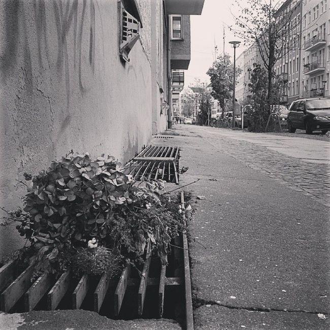 Ungeliebt Unloved Berlin