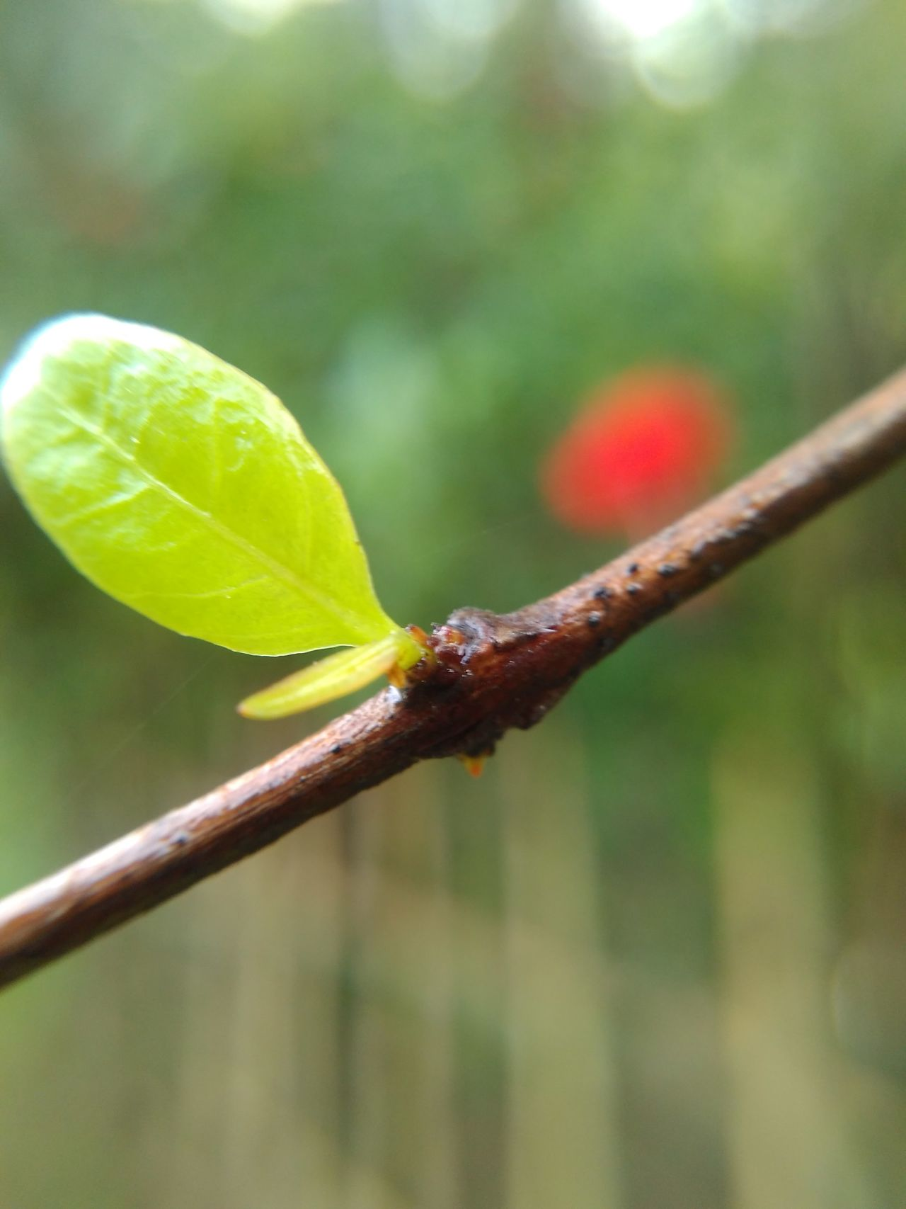 Leaf focused Close-up Nature Growth Plant Macro Beauty In Nature Drop No People Water Outdoors Day Fragility Freshness