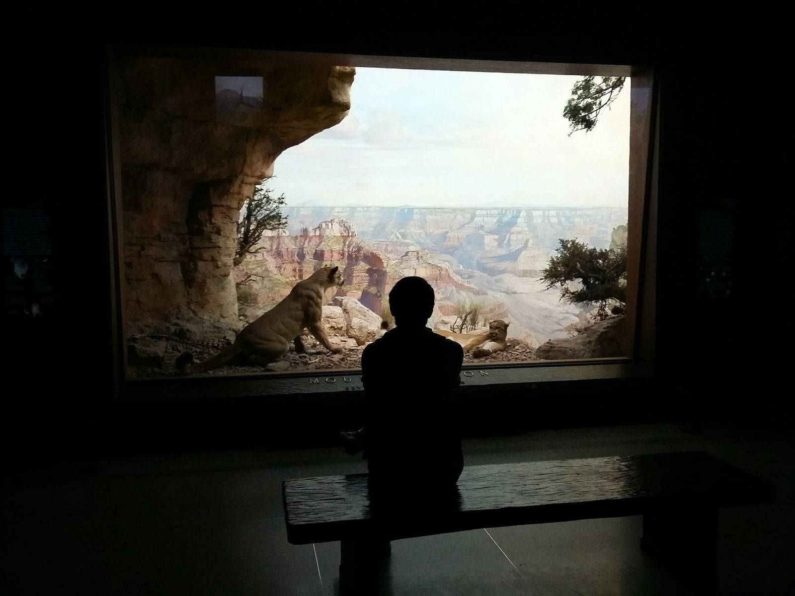 At the American Museum of Natural History III. · New York City New York USA Manhattan museum history display exhibition Taking a break pause Enjoying the View Pondering view from behind Becoming Art light and shadow Darkness &c. pp.