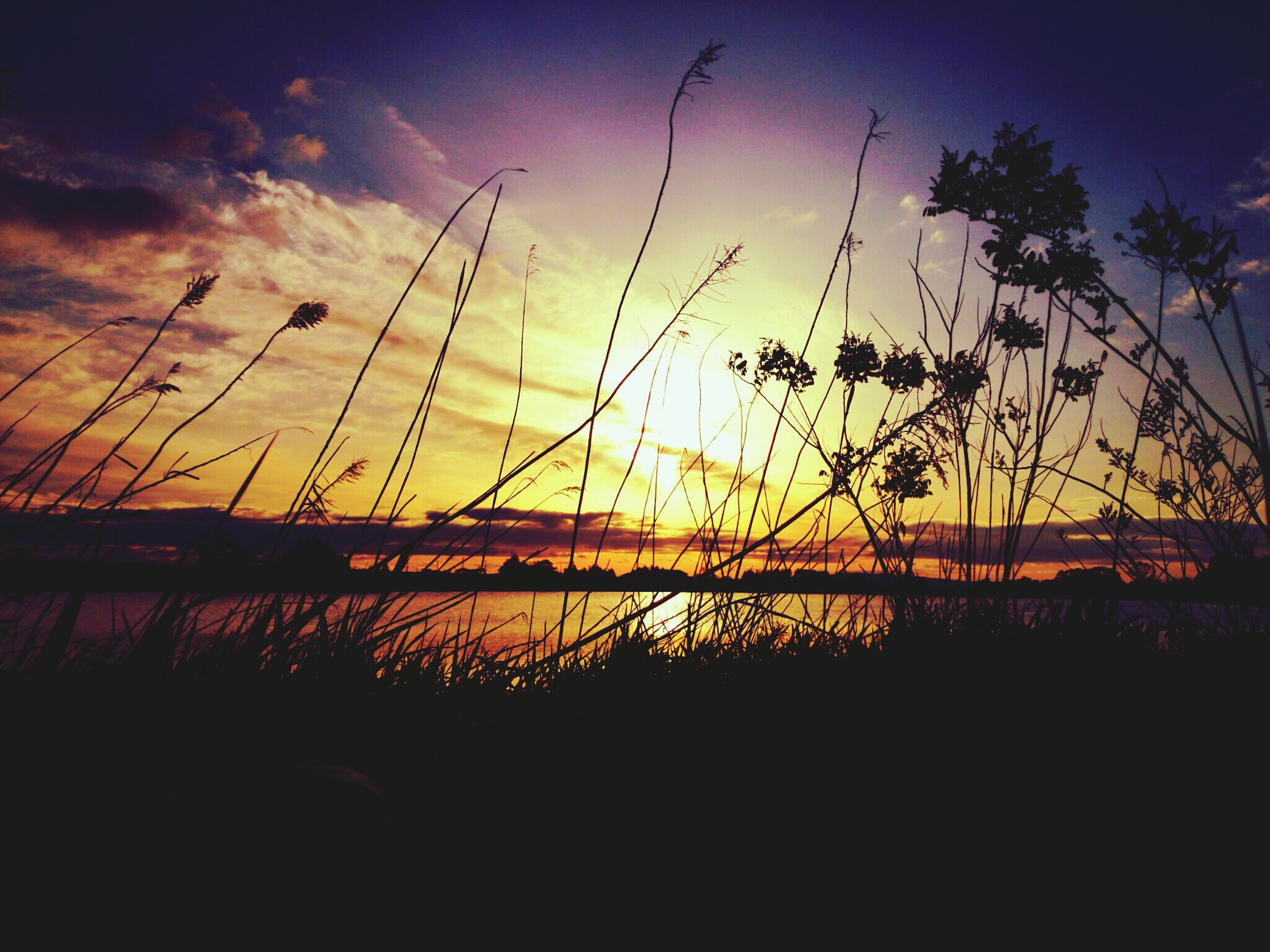 sunset, silhouette, sky, sun, tranquility, scenics, beauty in nature, tranquil scene, orange color, nature, water, cloud - sky, idyllic, plant, cloud, sunlight, outdoors, reflection, no people, dusk