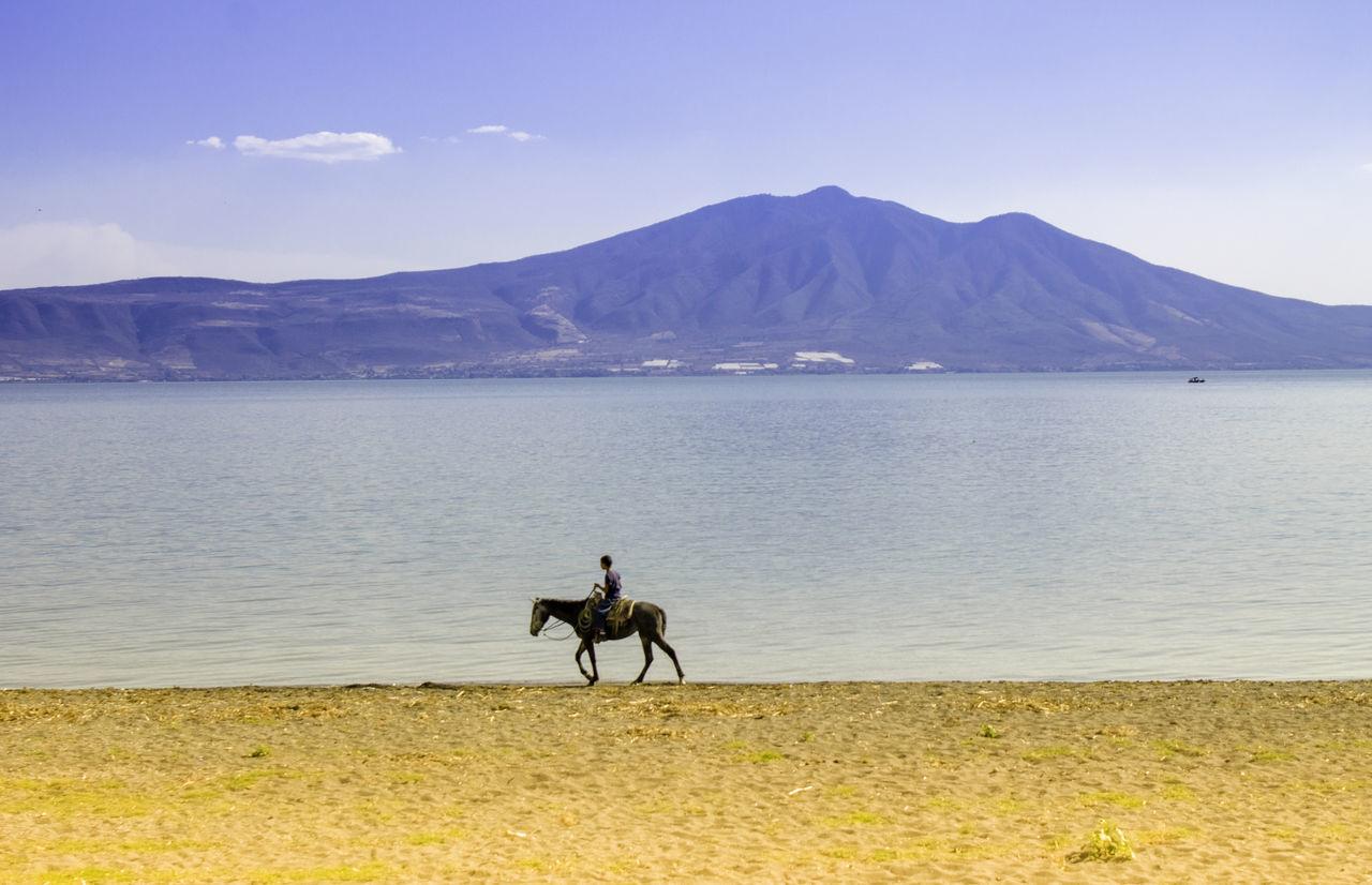 The horse and the lake Horseback Riding Lake Lakeshore Animal Horse Horse Riding Mexico Jalisco Ajijic Chapala First Eyeem Photo