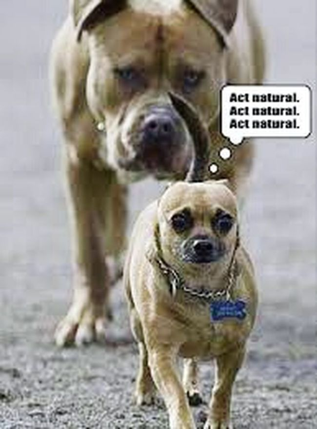 Animals What The...  LOL Funny OP