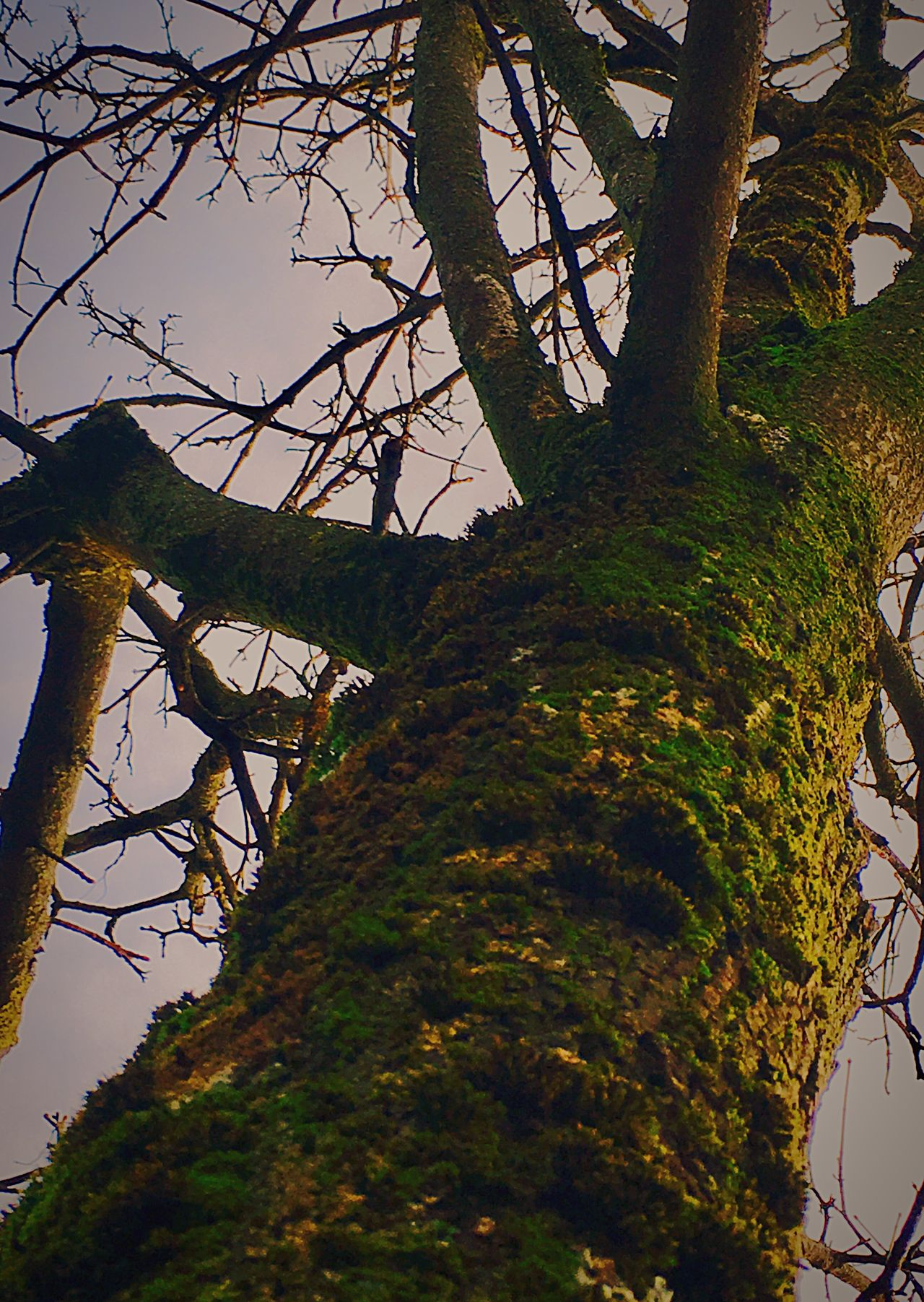 'Mr.Treesap' Beauty In Nature Branch Tranquility Sky Growth Outdoors Bare Tree No People Landscape Day Scenics Beautiful Day Urbexphotography Quickshots Urban Tree Oslo, Norway Winter2016 ❄ Winter Has Come Cloud - Sky Low Angle View Mossy Tree Nature URBd Nature KariJosefiné✨