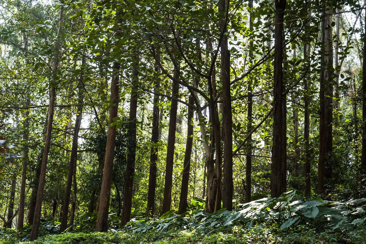 Tree Green Color Sunlight