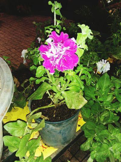 Pretty flower 💗 First Eyeem Photo