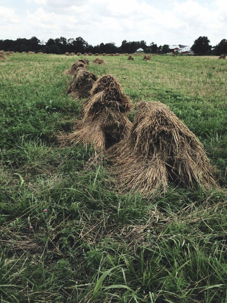 Amish Country Amish Farm Hay Field Haystack