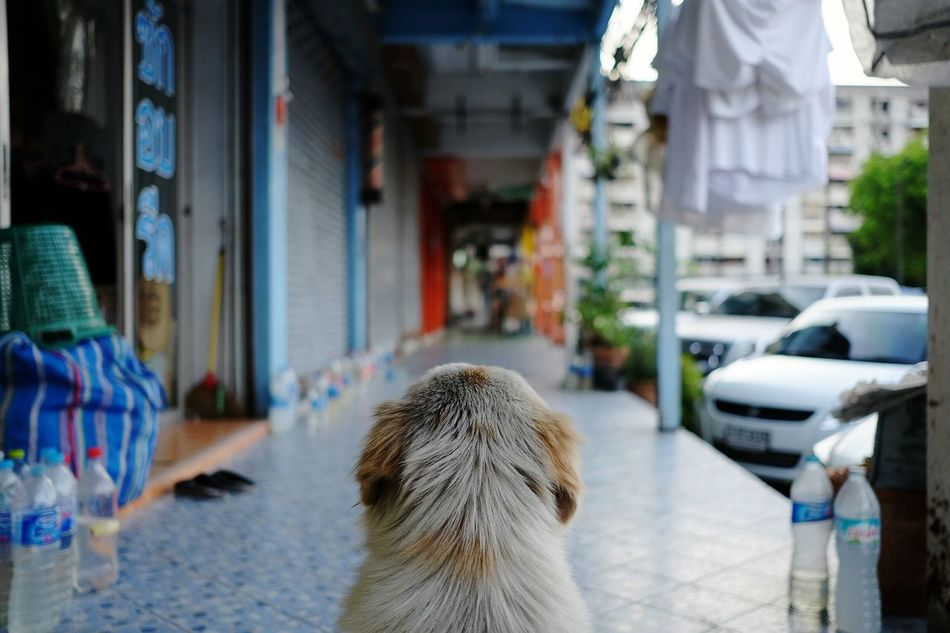 Rear View Dog
