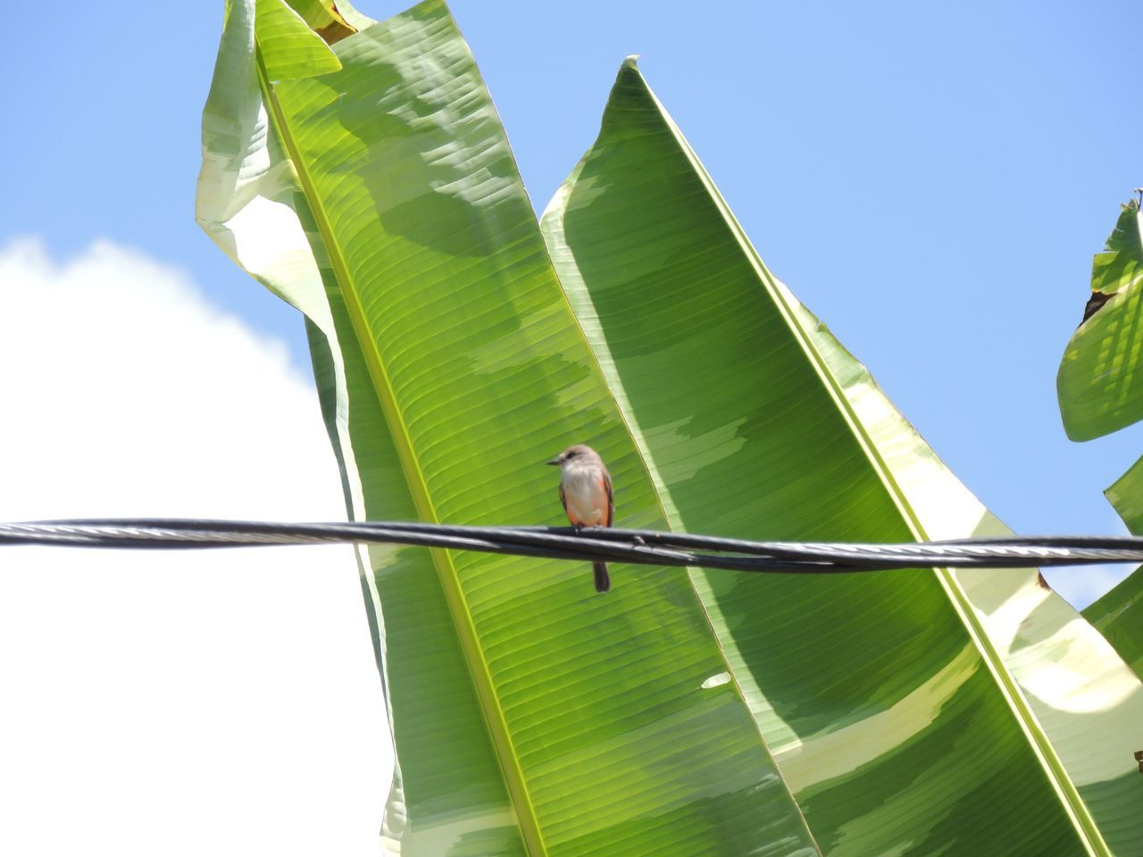 low angle view, day, bird, green color, sky, one animal, animal themes, outdoors, nature, leaf, beauty in nature, no people, parrot, clear sky, perching