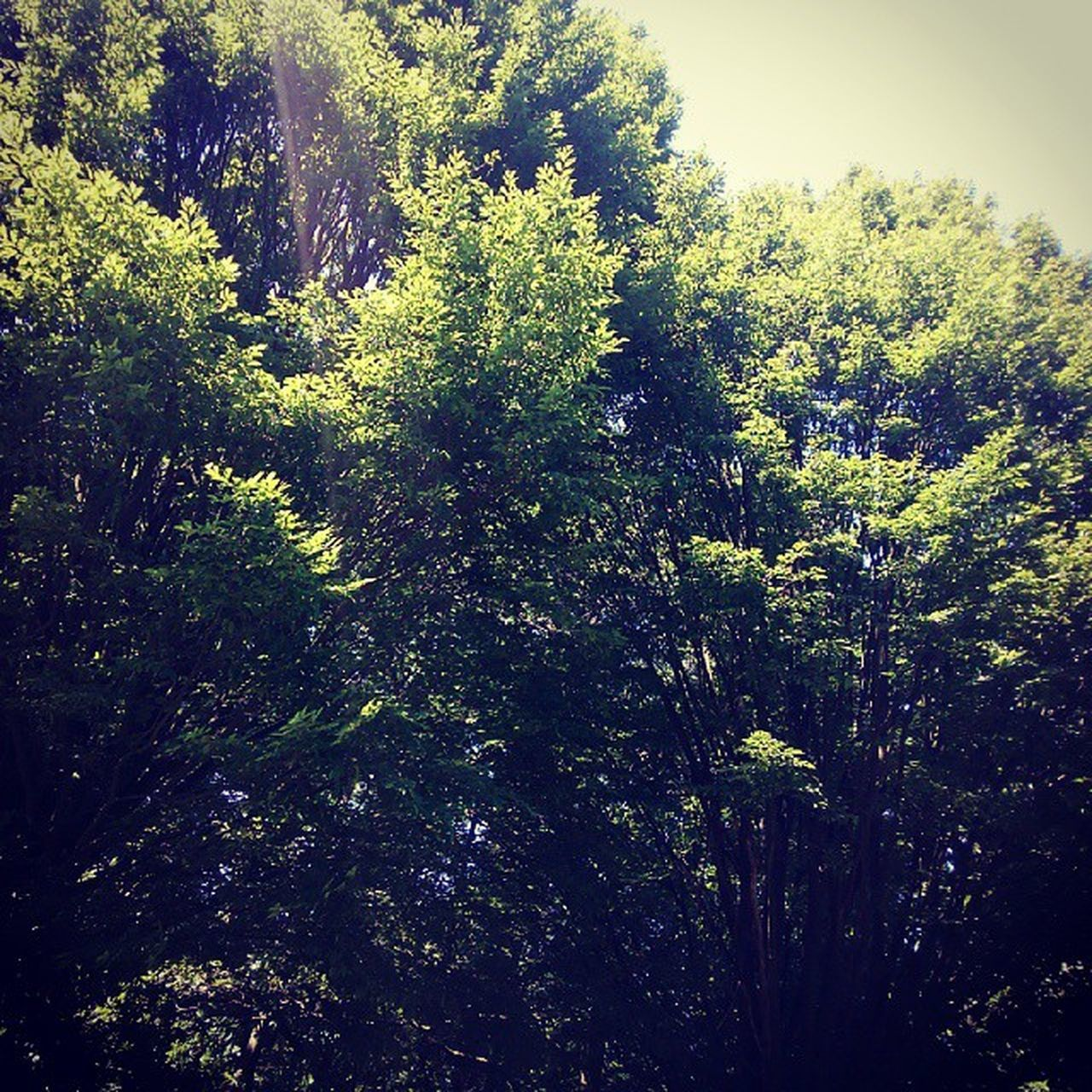 tree, nature, growth, forest, day, no people, outdoors, beauty in nature