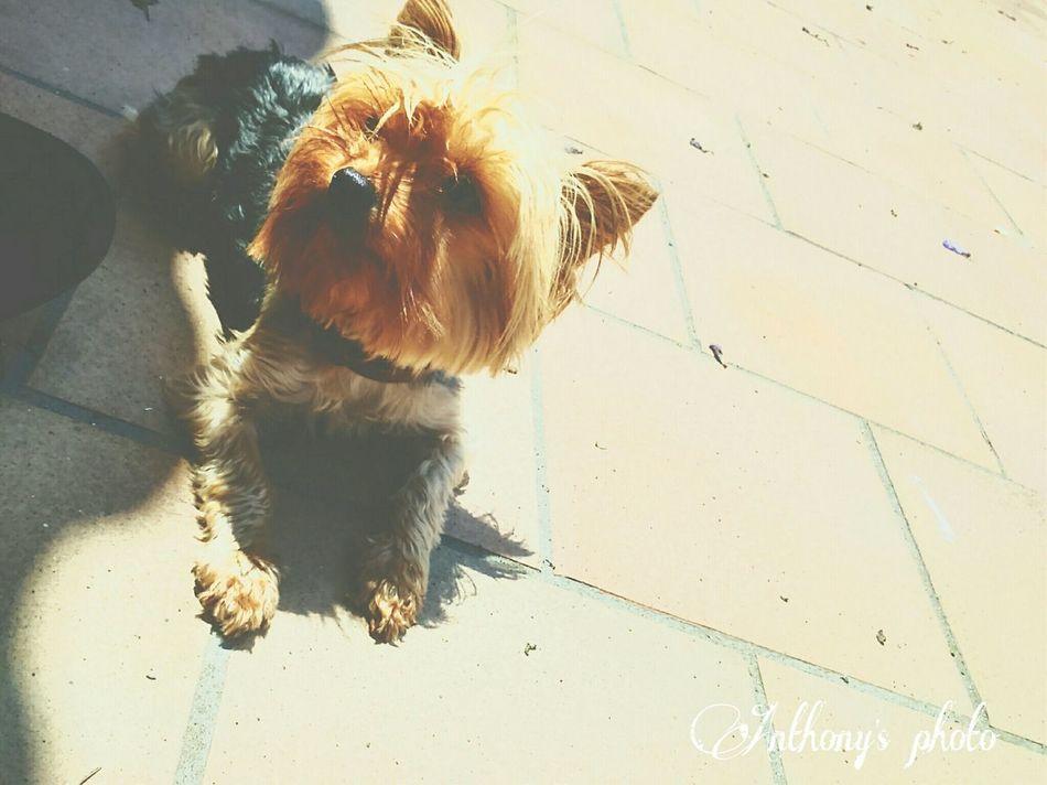 I ❤ u. Taking Photos Enjoying Life Hello World Love Dog Belleza Mynala Relaxing Belleza Natural