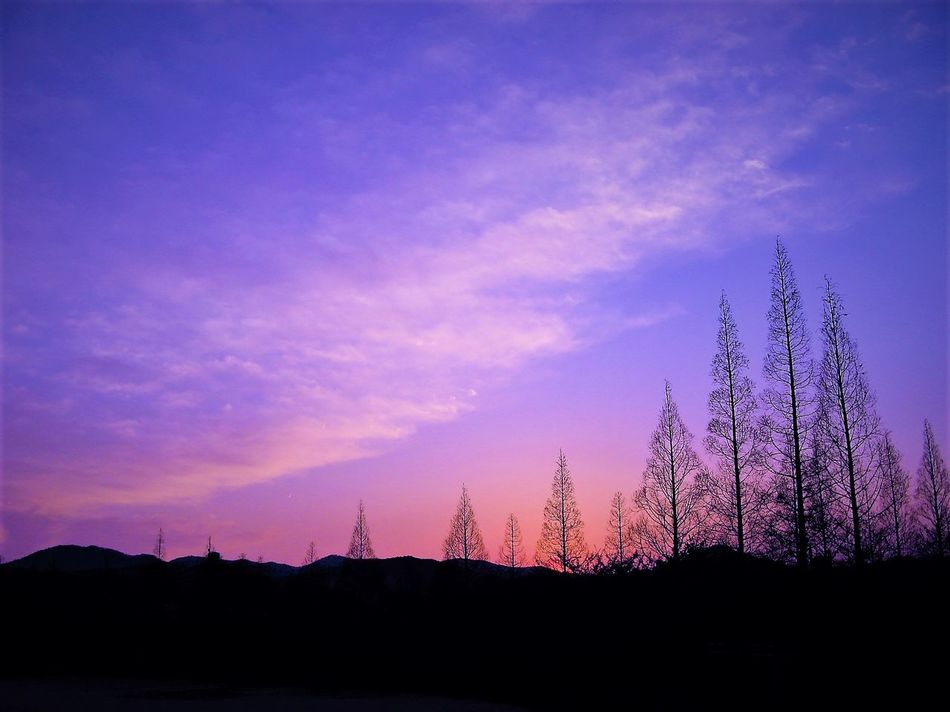 Beauty In Nature Cloud - Sky Leaf Less Mountain Nature Night No People Orange Color Orange Sky Sunset Outdoors Pink Color Pink Sky Purple Sky Purple Sky Sunset Scenics Silhouette Sky Sun Sunset Tranquil Scene Tranquility Tree