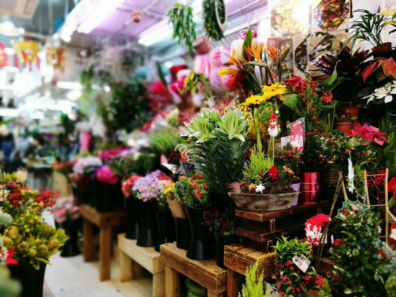 Last minutes prep for Christmas Flower Shop Multi Colored Market Stall Flower Market Retail  Freshness Asian Cities Art Is Everywhere EyeEm Gallery Leica Lens HuaweiP9 Embrace Urban Life Wandering Around Aimlessly EyeEm Best Shots Photograph Like Painting Wanderer Leicalens Wanderlust Street Photography On The Street Huaweiphotography Huawei p9 Christmas Is In The Air Christmas Christmas Decoration