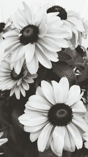 FallFlowers Flower_Collection Flowerporn Coneflower