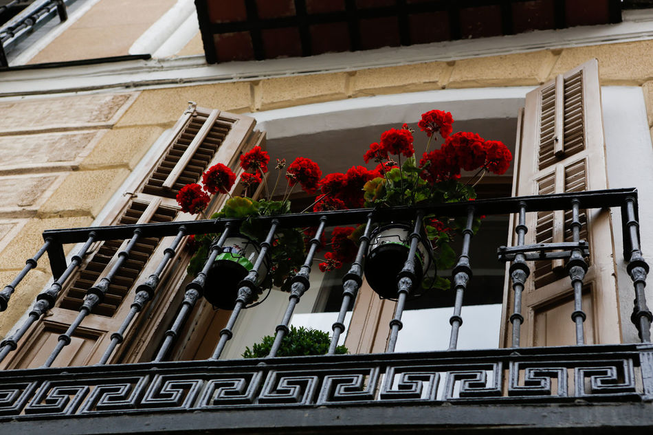 Architecture Building Exterior Built Structure Day Fachadas De Madrid Flower Growth Janelas Low Angle View Nature No People Outdoors Window