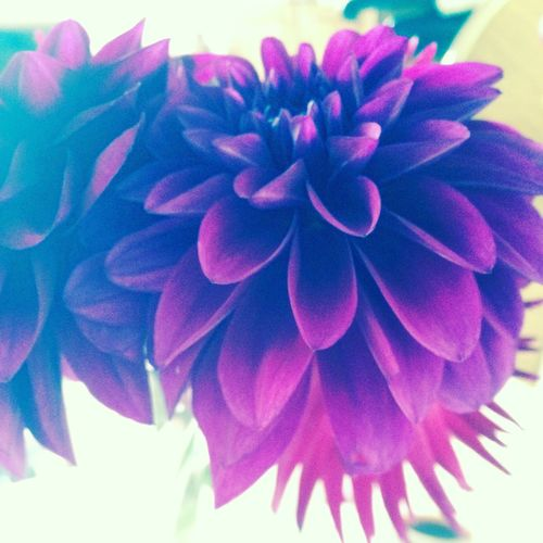 Flowerswithatwist Flowerswithfilters Flower Collection Flowerpower Flower Photography Nature Textures Beautiful