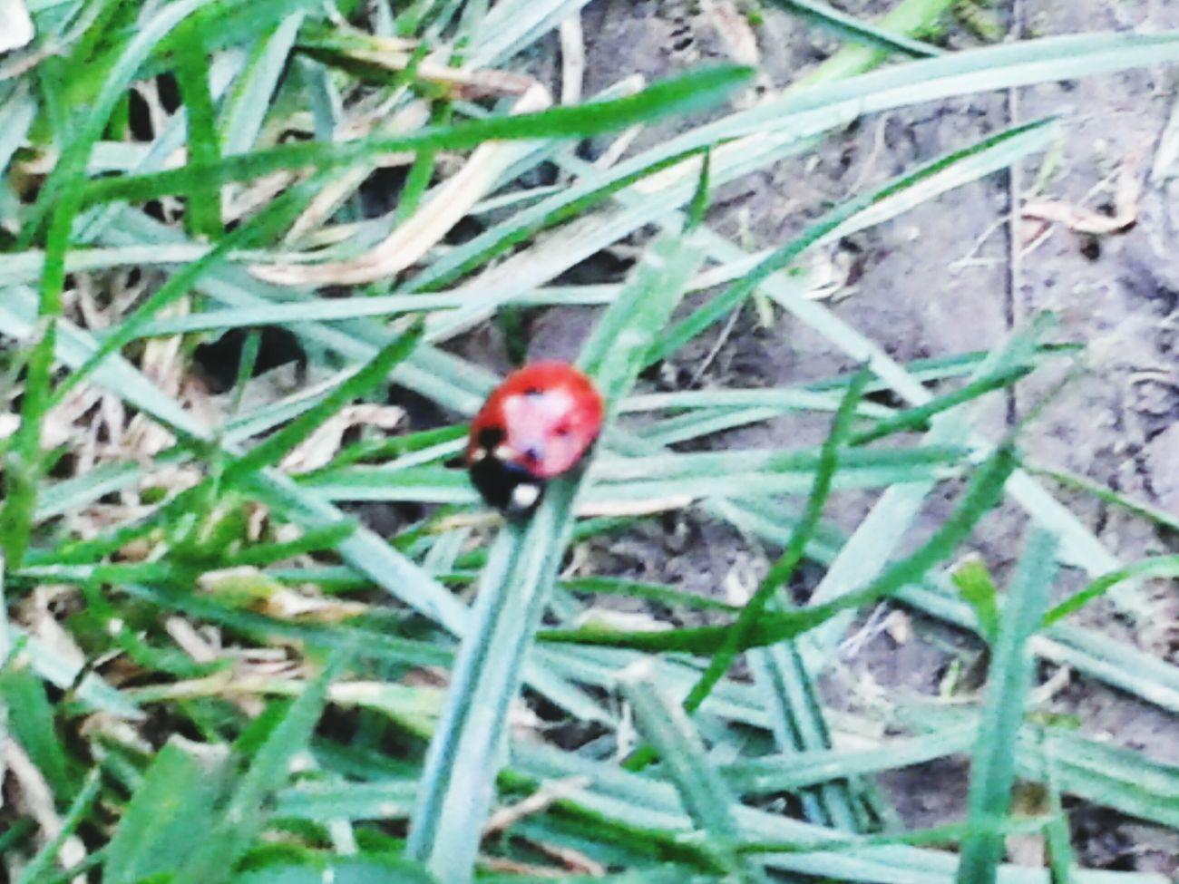 Bug Bugs Grass Taking Photos