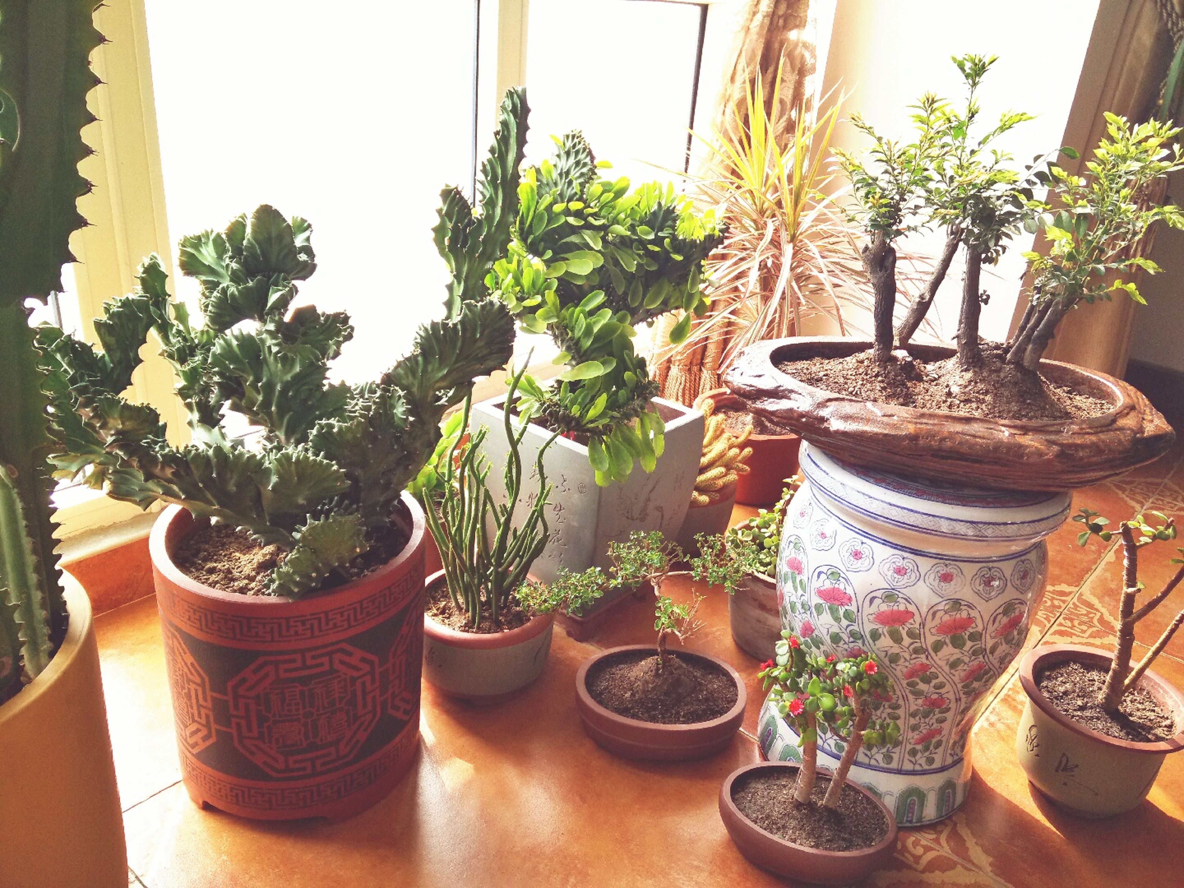 potted plant, plant, indoors, growth, flower, flower pot, vase, table, pot plant, window sill, window, home interior, freshness, leaf, glass - material, front or back yard, nature, decoration, day, green color
