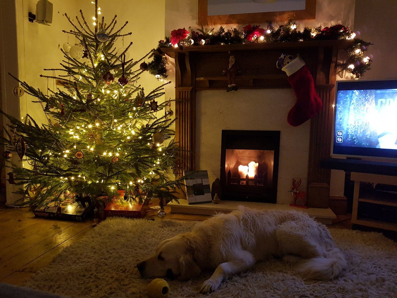 Golden Retriever dog lies on a white rug in front of a burning fire and a lit and decorated Christmas tree. A traditional Christmas scene indoors from Christmas 2016. Christmas Tree First Eyeem Photo Christmas Time Dog Golden Retriever Indoors  Traditional Fire Candle Light Christmas Tree Lights Scene Decoration Rug