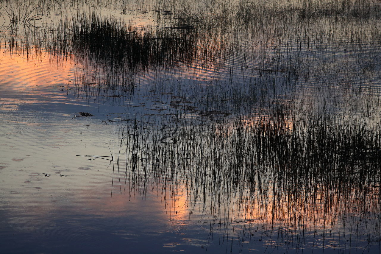 reflection, water, sunset, lake, nature, no people, outdoors, animals in the wild, tree, animal themes, day, bird, beauty in nature