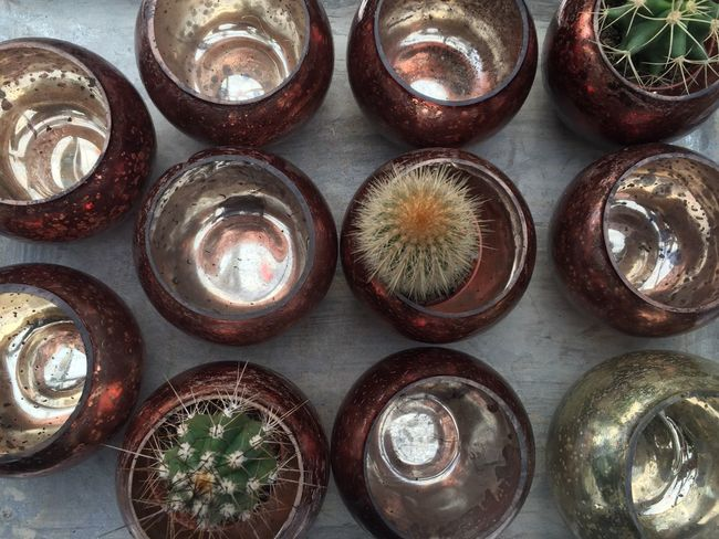 In A Row Arrangement High Angle View No People Indoors  Table Close-up Freshness Day Pot Potted Plant Cactus Circles