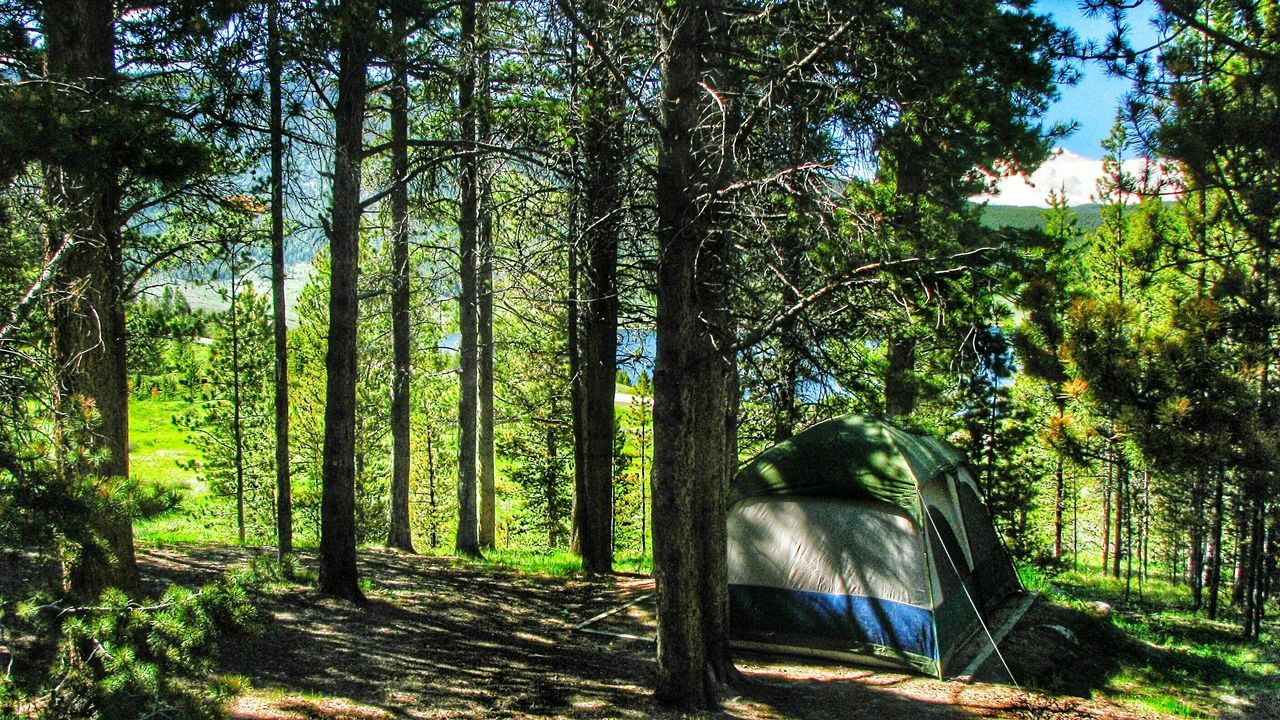 Tent Amidst Trees In Forest