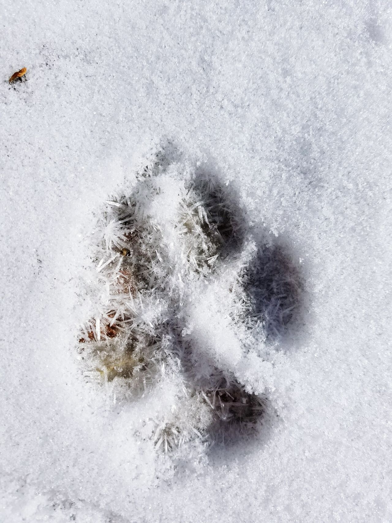 Dogs paw prints froze and crystallized! Foot Prints Frozen Crystalized Basalt Colorado