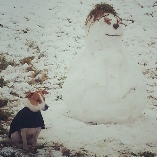 Wiltshire Snow Dog Warmcoat snowman freezing fun