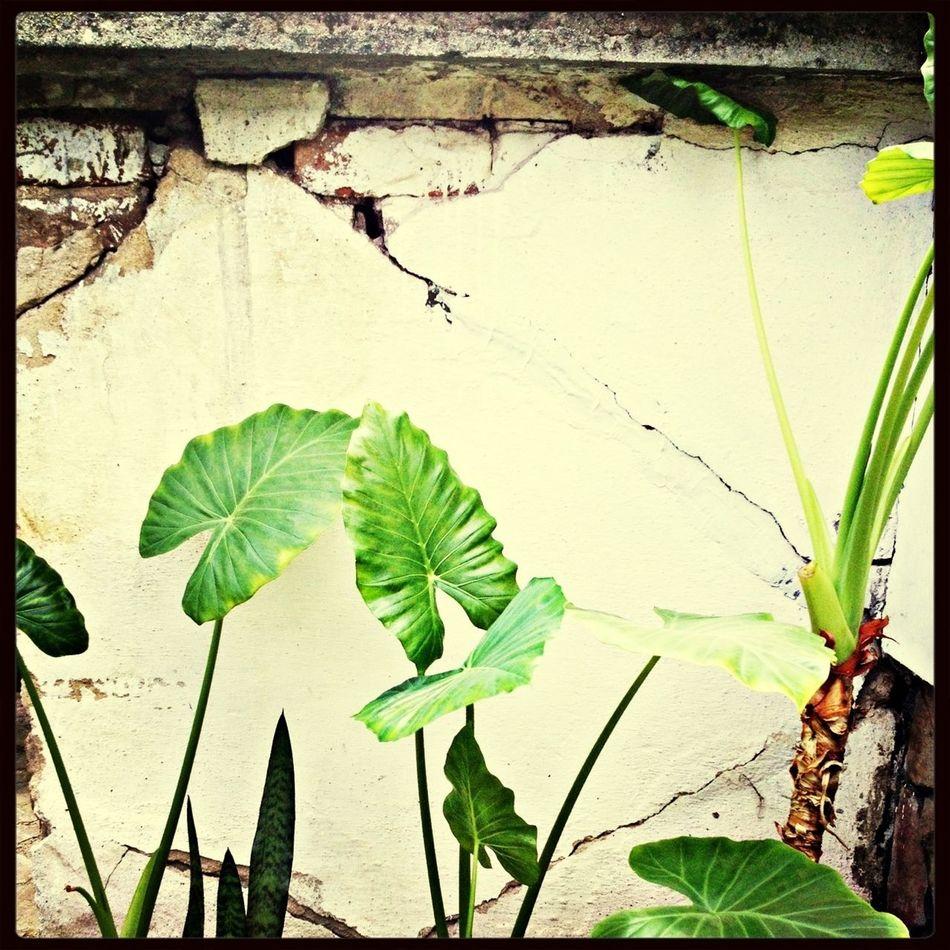 Stillife Plants