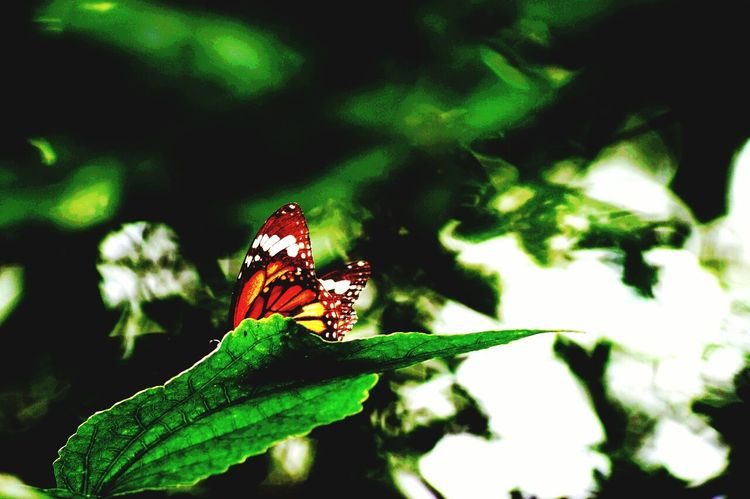 Myshot Daily_captures Photography Mysore My Favorite Picture  Butterfly ❤ My City Is Beautiful My Camera My Alpha Myspace
