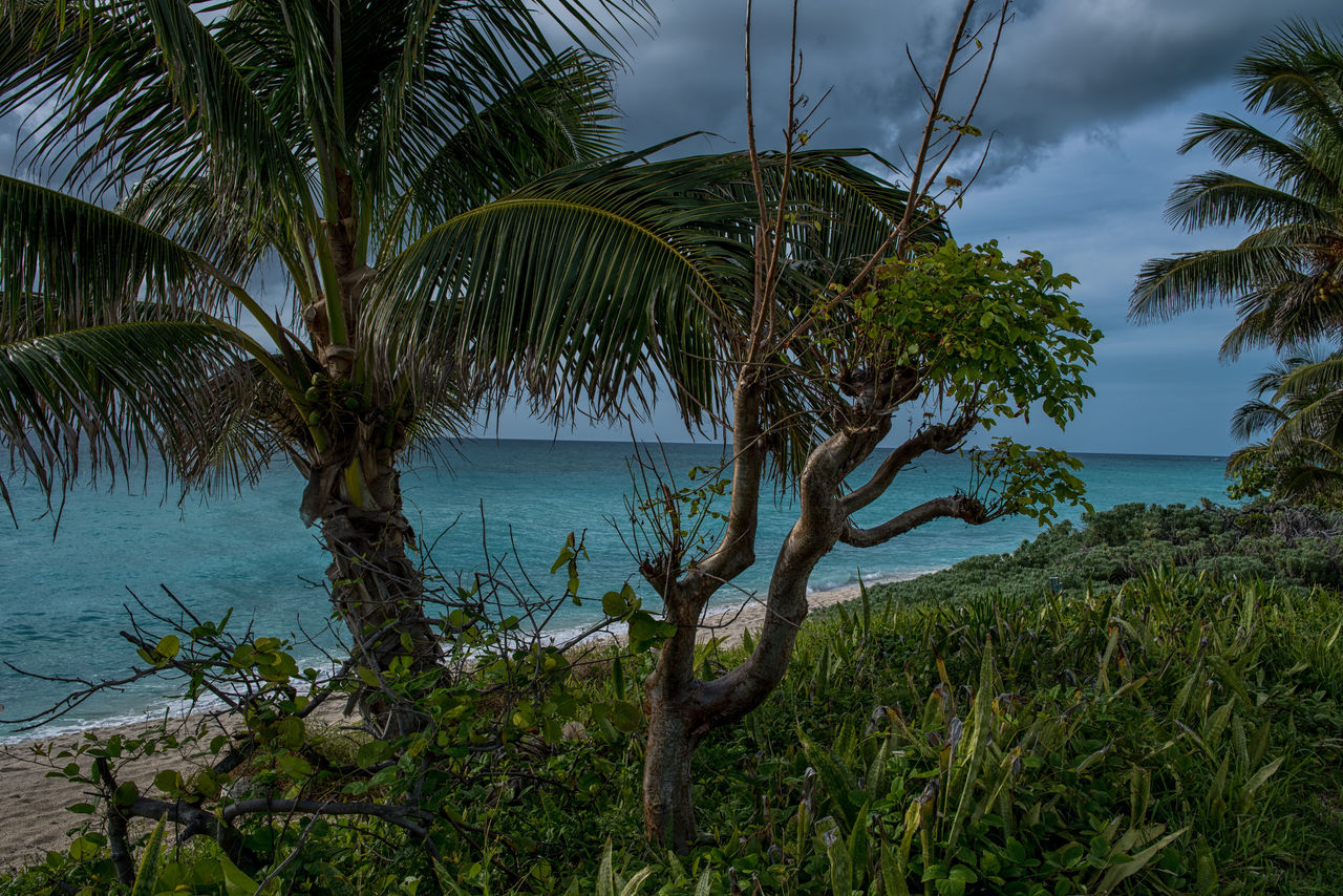 Wild Beach Beauty In Nature Day Green Color Growth Horizon Over Water Nature No People Outdoors Palm Tree Photographyisthemuse Plant Scenics Sea Sky Tranquil Scene Tranquility Travel Destinations Travel Photography Tree Turquoise Water Water