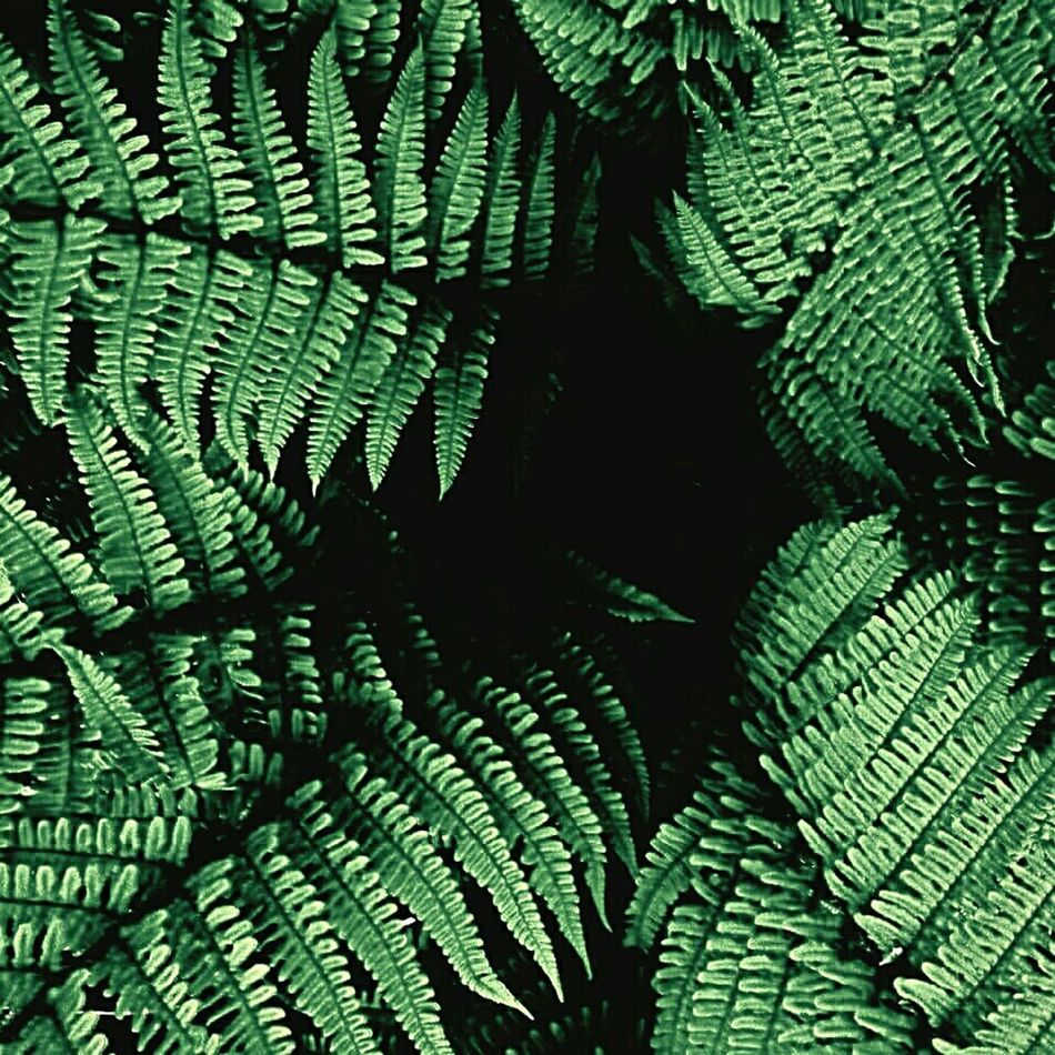 Check This Out Sculptural Fern Ferns Symmetry Green Color Fonds Plants 🌱 Plantography Plant Photography Eyem Gallery Eye For Photography Viewpoint Eye4photography  EyeEm Nature Lover MyWorldInPictures Check This Out Eyemcaptured Eyemphotography Myworldpost Perspectives Perspectives And Dimensions Texture Prehistoric Life