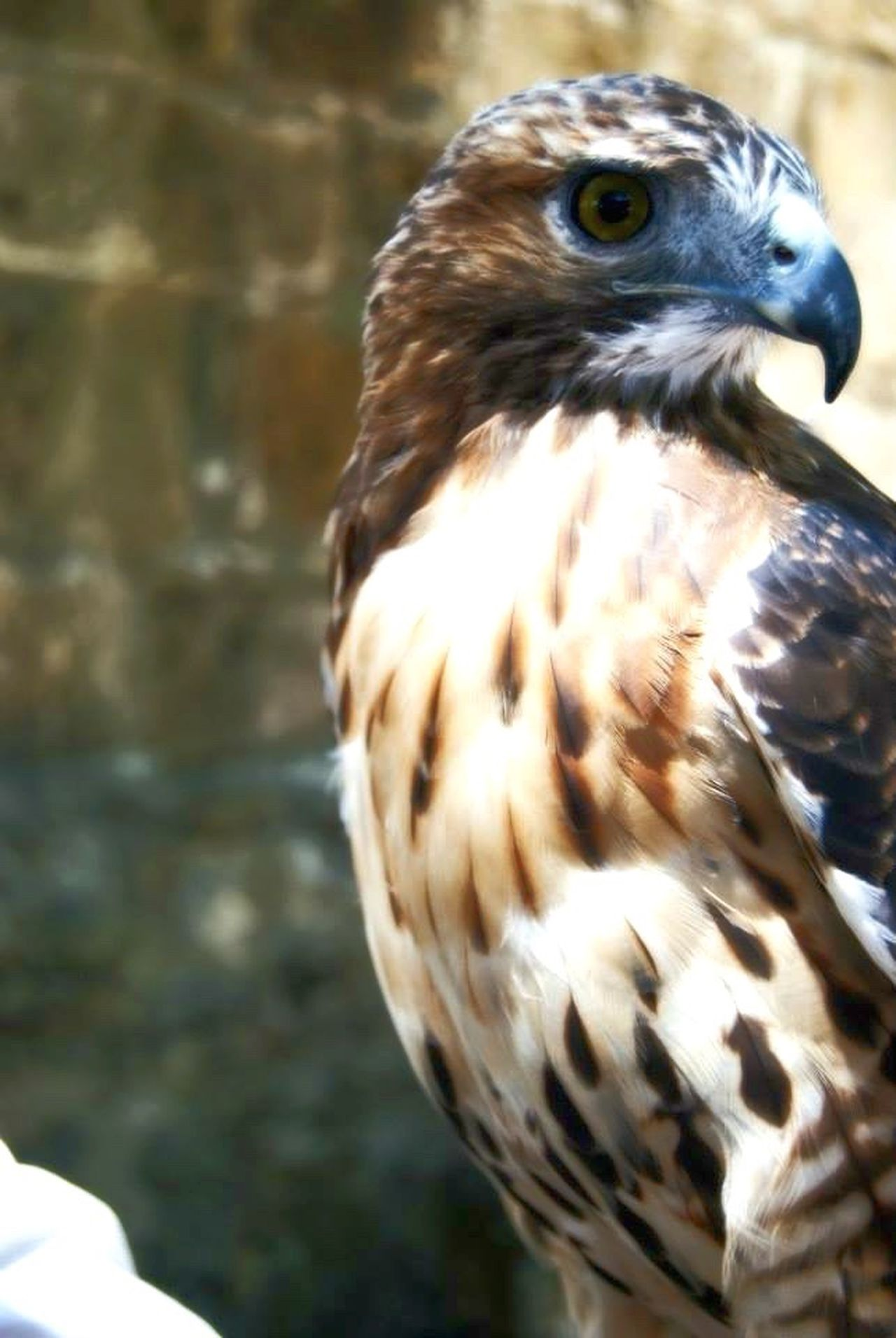 Instinct Falcon Eagle Instinct Wildlife Lisbon