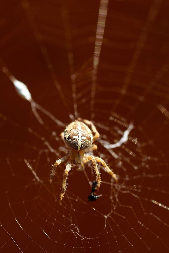 Macro_collection Spider Insects  The Explorer - 2014 EyeEm Awards