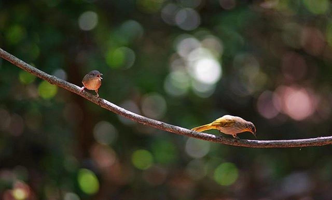 one animal, animal wildlife, branch, outdoors, tree, animals in the wild, day, no people, nature, defocused, bird, animal themes