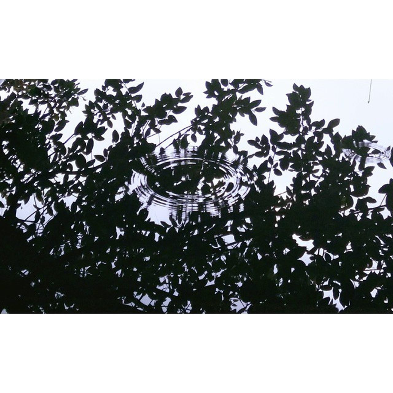 low angle view, no people, growth, tree, indoors, day, time, close-up