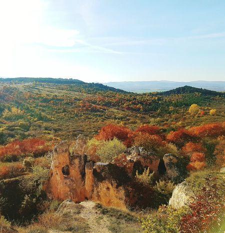 Autumn🍁🍁🍁 Autumn Colors Forestwalk