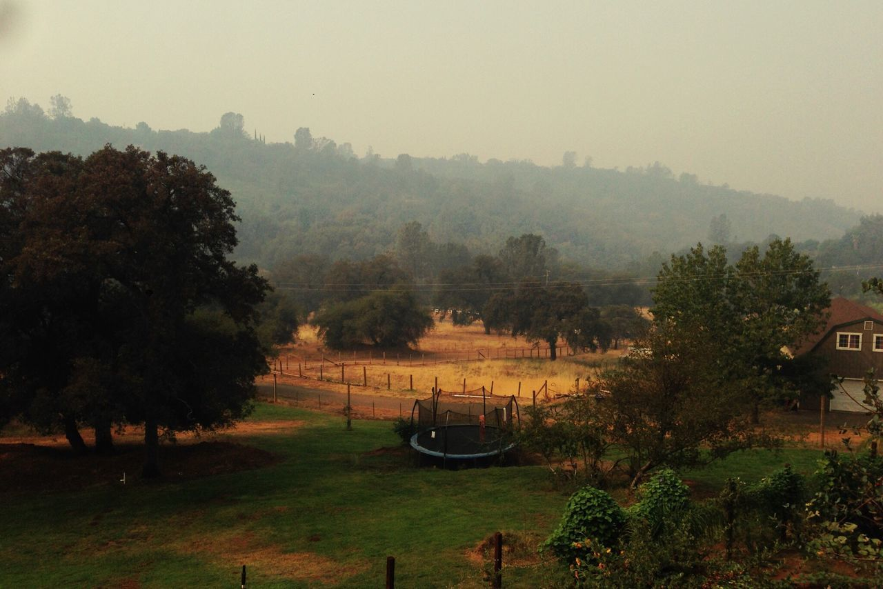 Tree Nature Beauty In Nature Growth Tranquil Scene Scenics Tranquility Outdoors No People Grass Day Sky Landscape California Fog Morning Haze EyEmNewHere Trampoline Horizon Green EyeEmNewHere