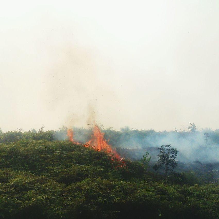 kemarau... Fire ! Burning Haze Photooftheday