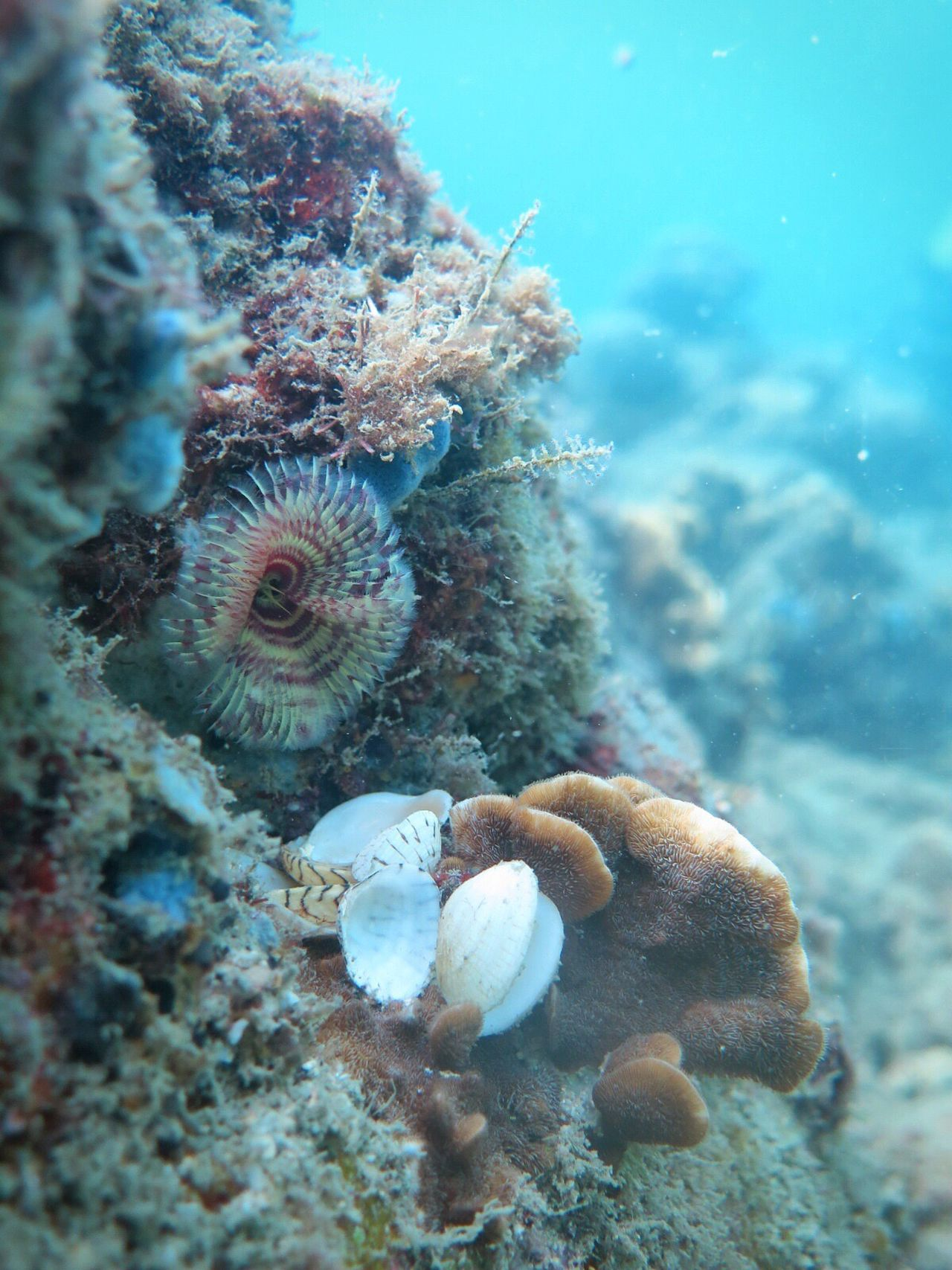Invertebrate Featherdusterworm Underwater Sea Life Coral UnderSea Sea Animal Themes Swimming Animals In The Wild Water Nature No People Beauty In Nature Close-up Shells Living Organism Underwater Photography Canonphotography in Cambodia