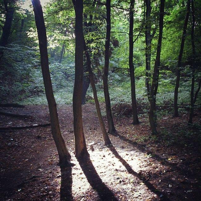 Вечерняя прочистка чакр сырец Киев город Syrets forest forest_trip лес дневник_наблюдателя kiev insta_kiev kievblog thekievblog wowkiev kievgram природа nature