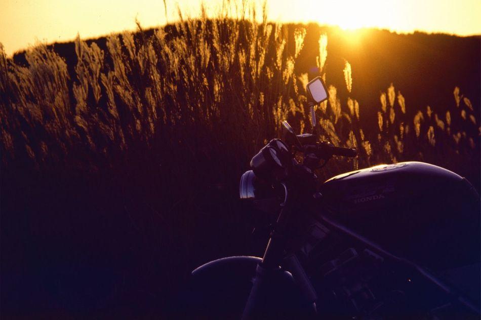 The sunset. Sunset EyeEm Best Shots Autumn Autumn Colors Silver Grass Motorcycles Nostalgia Film No Filter