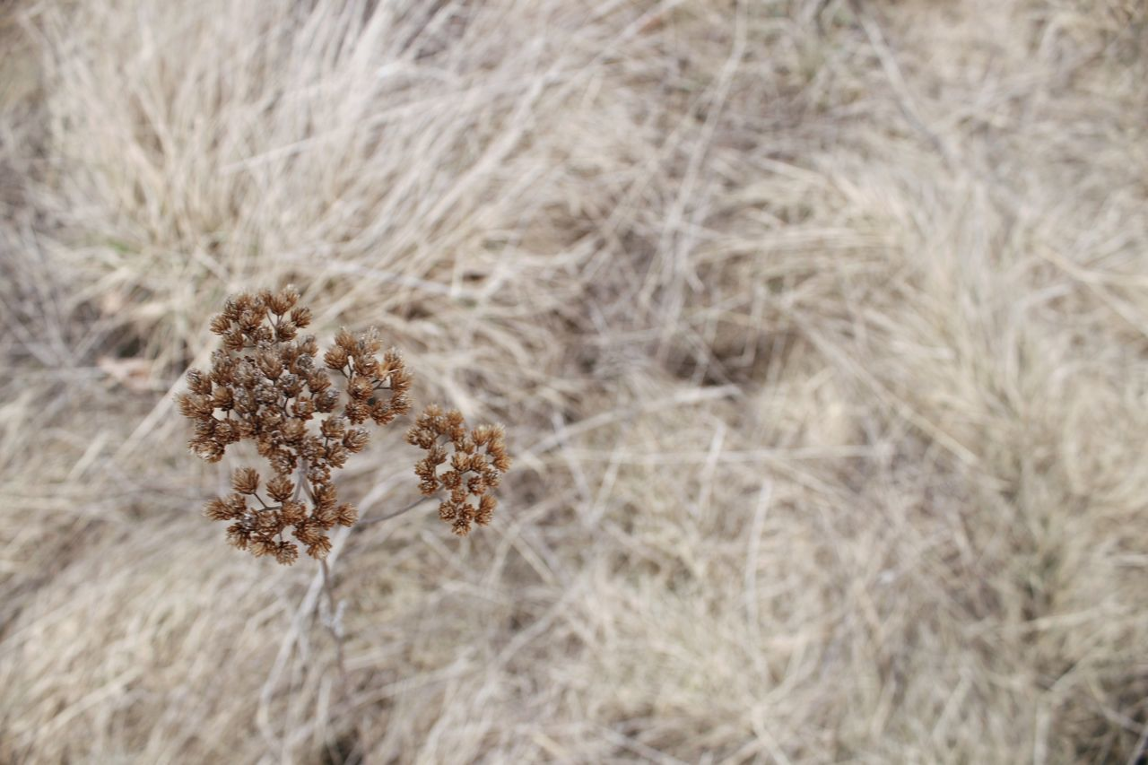 Nature Outdoors Field Growth Plant Close-up Fragility Grass Steppe No Mans Land Dry Tundra Grassland Yellow Grass Autumn Dryland Flower Flowers